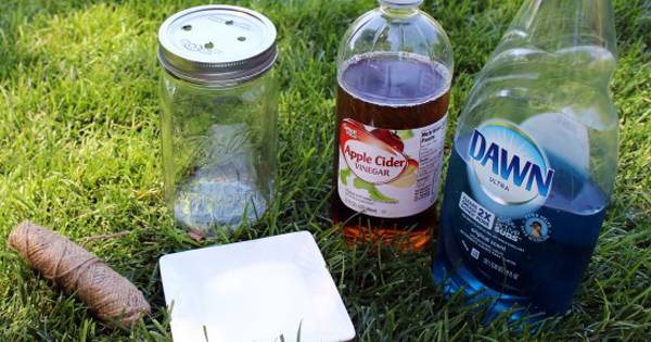 How To Get Rid Of Flies Fast With These DIY Traps!