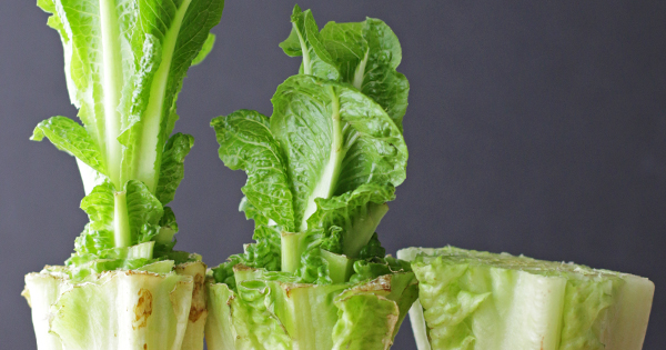 5 Foods You Can Regrow Using Nothing But Water